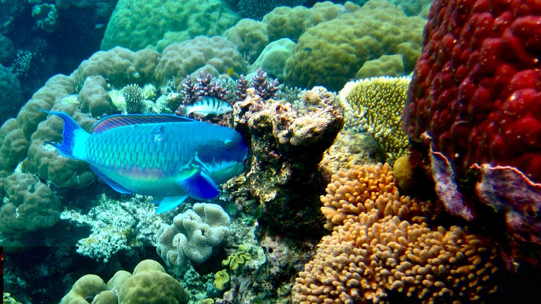 The Great Barrier Reef | © Kyle Taylor/Flickr