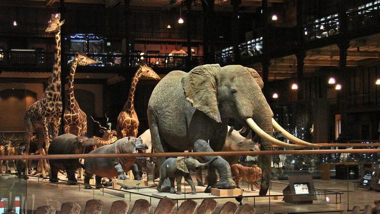 La galerie de l'Evolution at the Museum National d'Histoire Naturelle│© Jean-Pierre Dalbéra