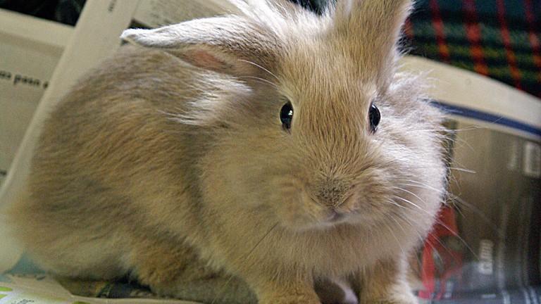 Ms Bunny has lots of rare rabbit breeds