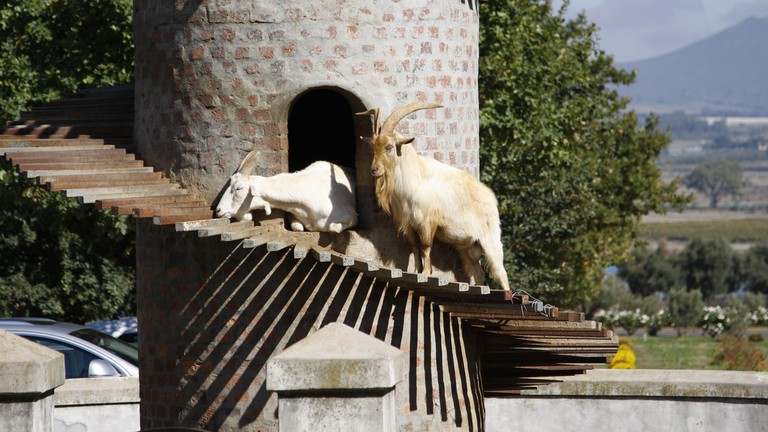 Goat Tower, Fairview Cheese and Wine Farm, Paarl