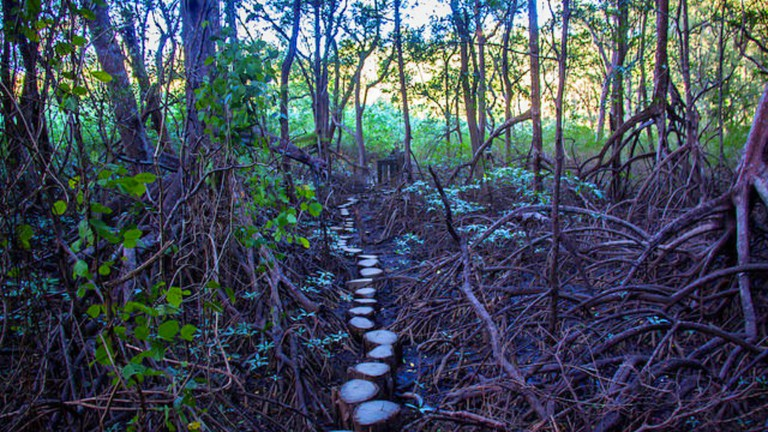Path to the Nosara Biological Reserve from Olas Verdes