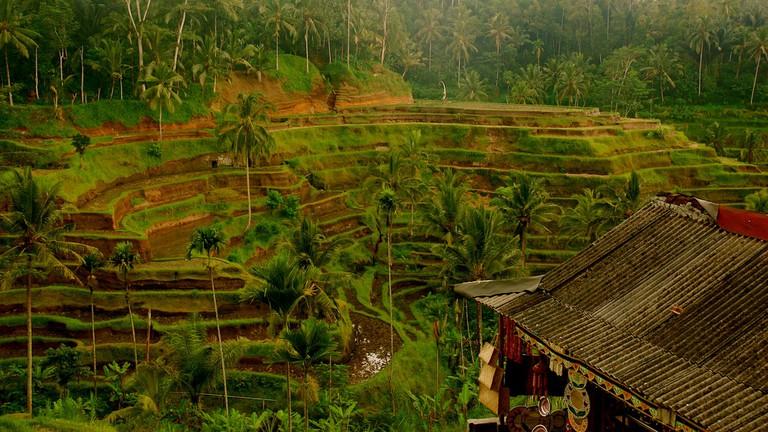 Bali rice terrace