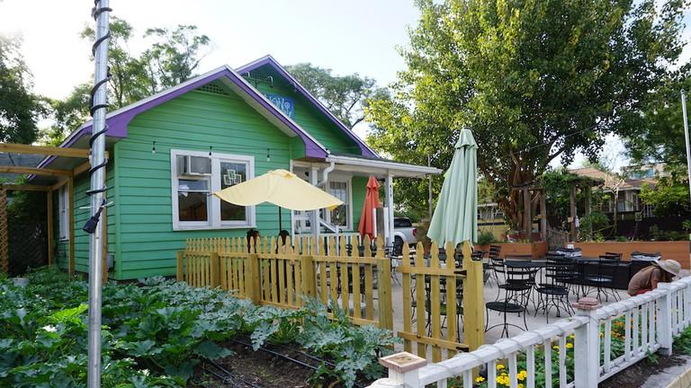Dandelion Communitea Cafe Orlando || photo by Kelsey Glennon