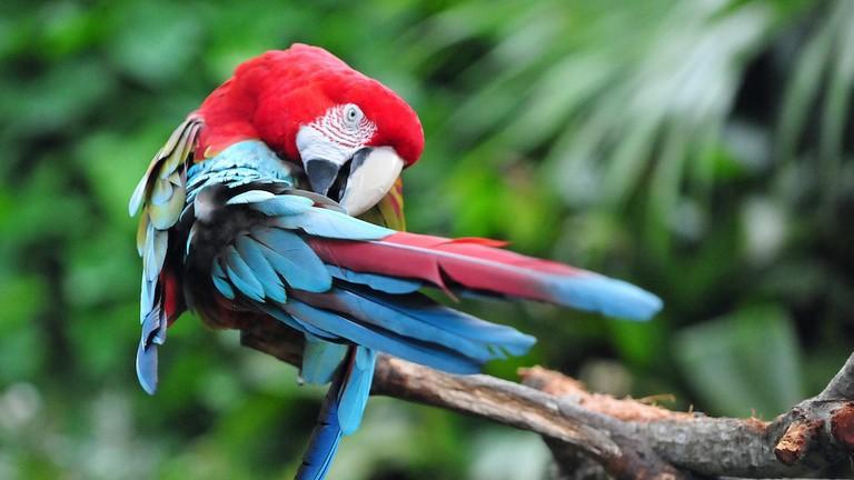 Birds in Costa Rica