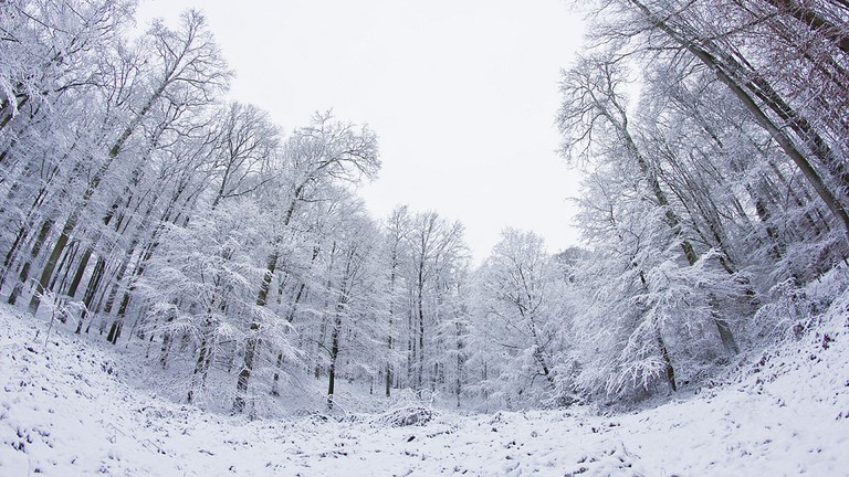 The Sonian Forest in wintertime
