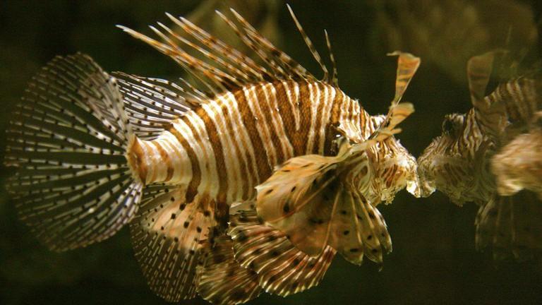 Fish inside Shark Reef