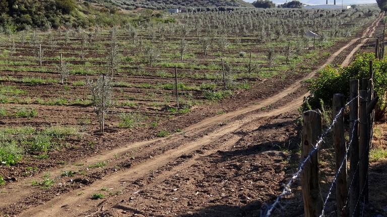 Wine country in the Valle de Guadalupe, Ensenada