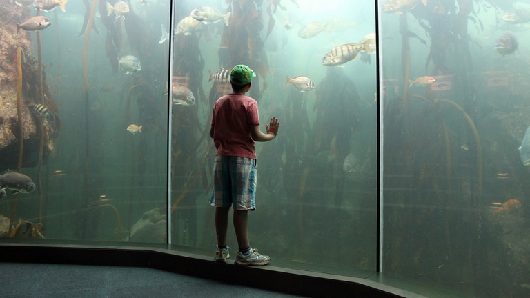 Two Oceans Aquarium, Cape Town