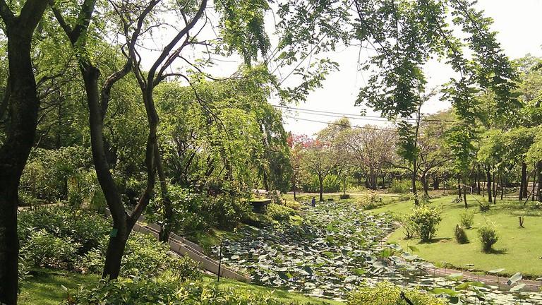 Greenery in Queen Sirikit Park in Chatuchak, Bangkok