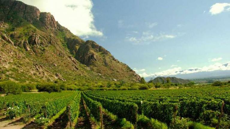 A winery near Salta