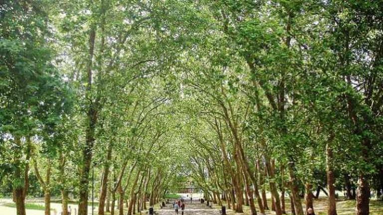 Verdant park