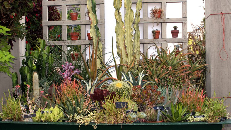 A collection of cultivated succulent plants