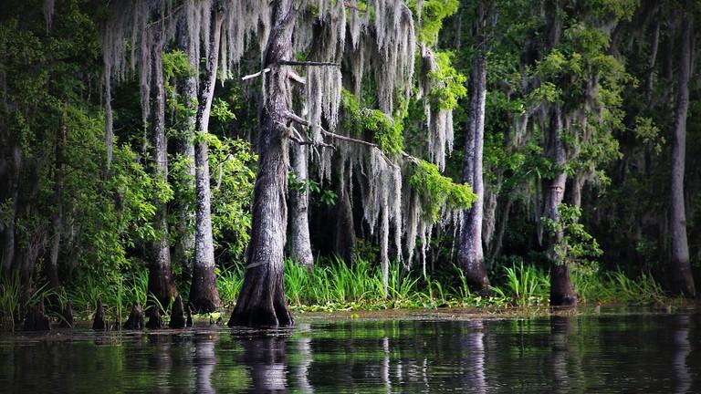 The Louisiana bayou