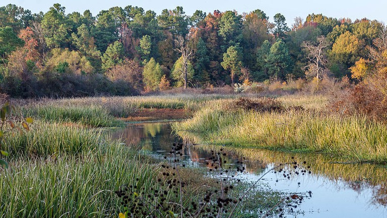 Landscape around Pine Bluff