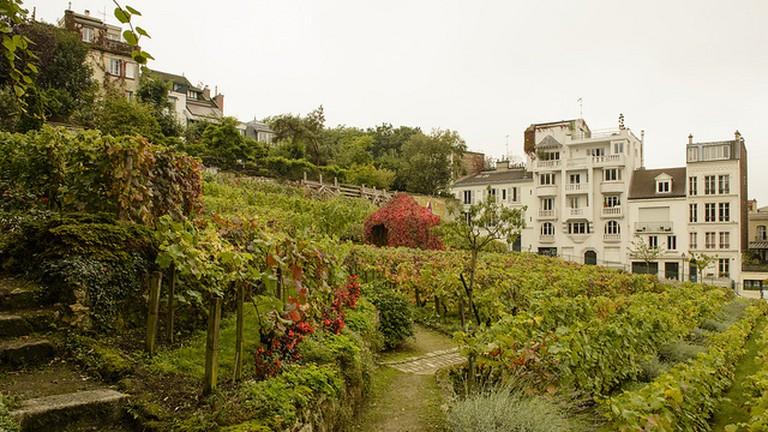 Clos Montmartre 1