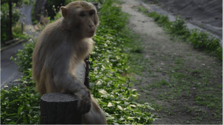 This hilly area greets its visitors with dozens of monkeys even before stepping onto the dirt path
