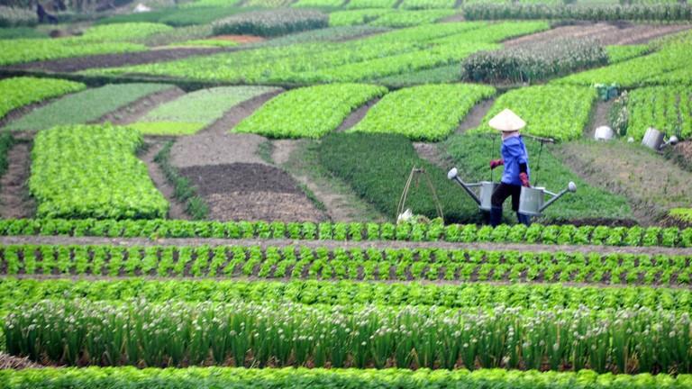 Vietnamese farmers   © Dennis Jarvis/Flickr