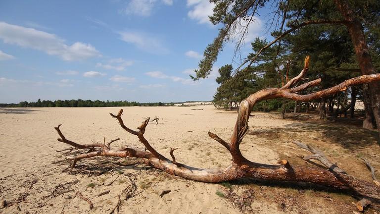 De Loonse en Drunense Duinen National Park in the Netherlands | © Red Junasun / Flickr