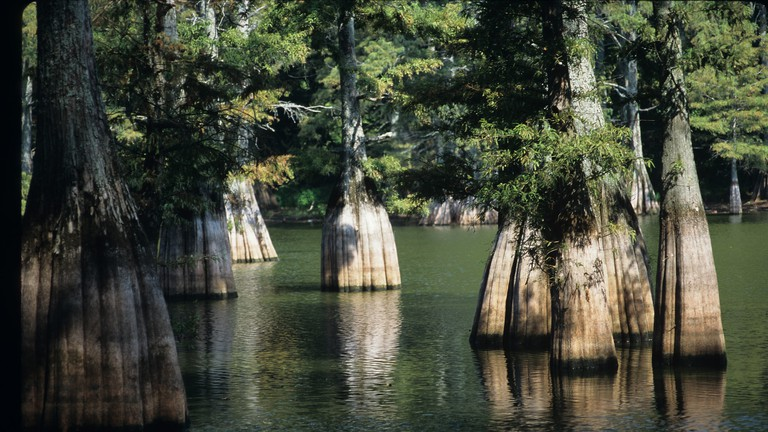 Big Thicket National Preserve