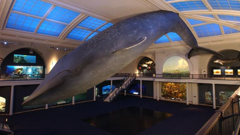American-Musuem-of-Natural-History_Milstein-Hall-of-Ocean-Life-1