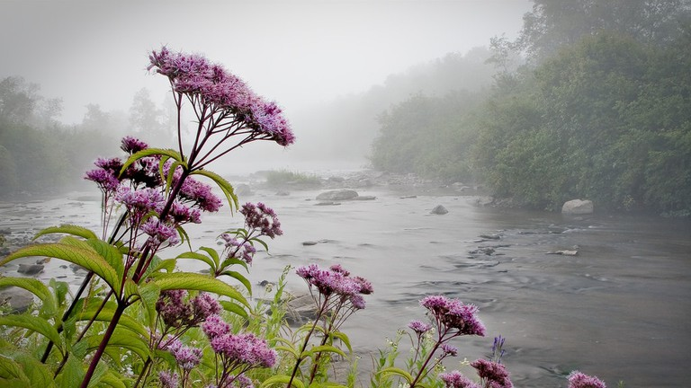 The Best Places To See Wildflowers In West Virginia