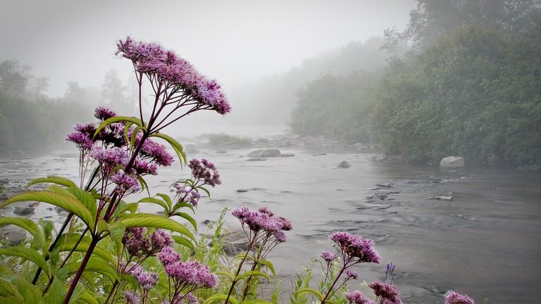 canaan valley flowers wv