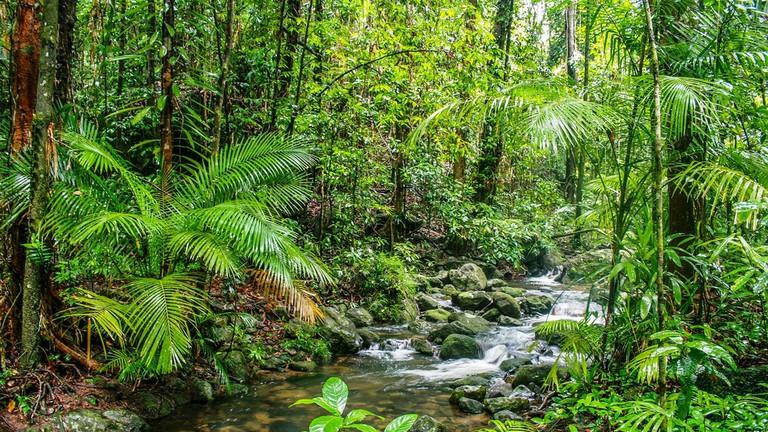 Mossman Gorge © Thani Schroeder / Flickr