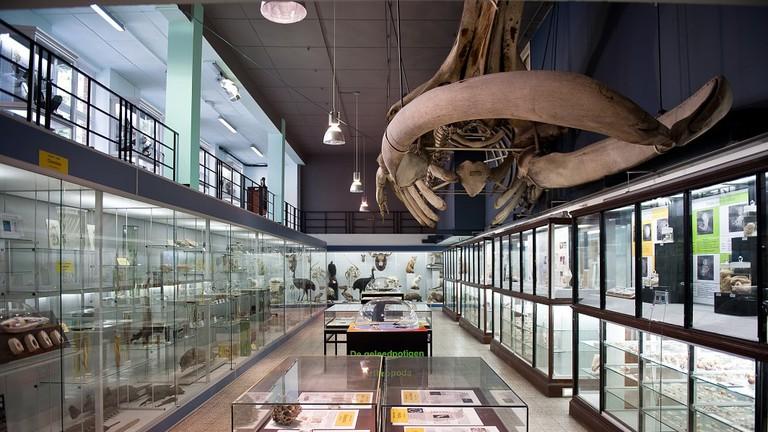 MuseumDierkunde_001