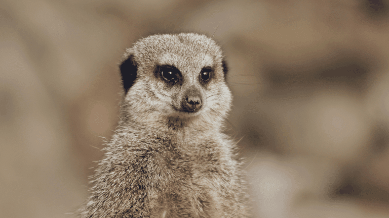 Unusual experiences_Meerkat-min