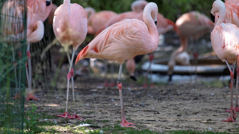Artis' flamingo enclosure