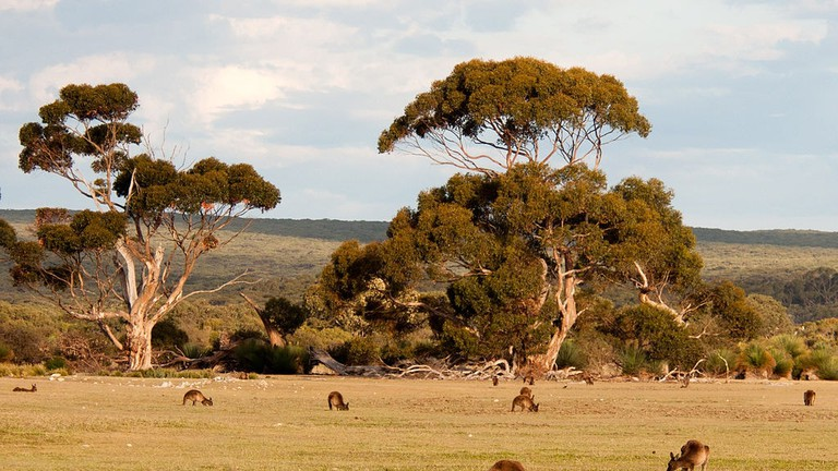 Kangaroo Island © Paul Asman and Jill Lenoble / WikiCommons