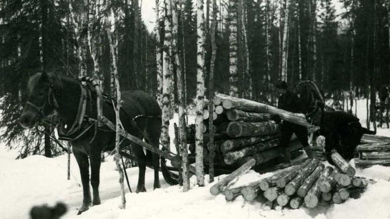 Logging_Finland_1938