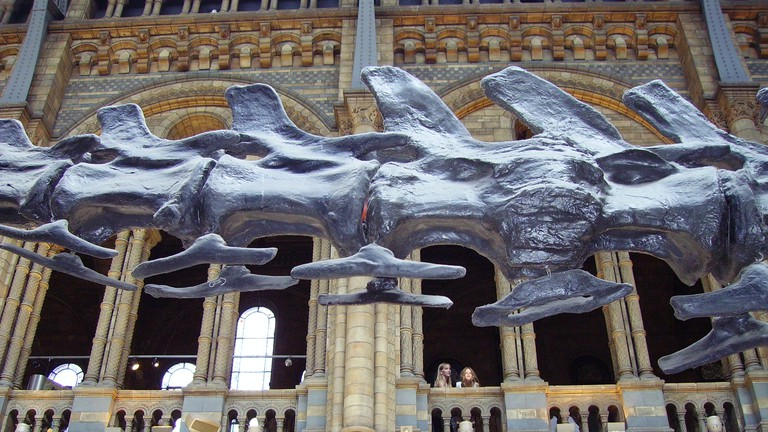 The Natural History Museum, London, has one the most famous dinosaur exhibits in the world