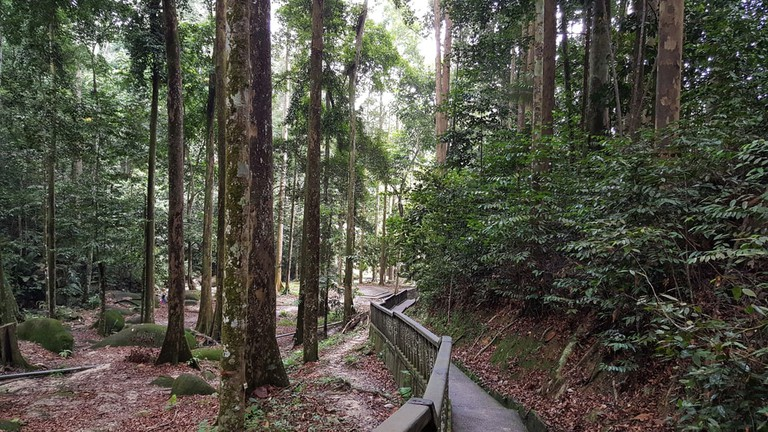 Forest area with walkway in FRIM (Forest Research Institute Malaysia), Kuala Lumpur