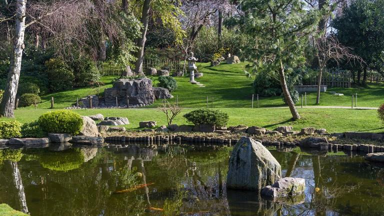 Koi swim in the pond of Holland Park's Kyoto Garden