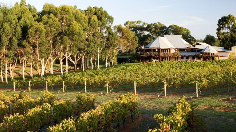 Vasse Felix vineyard © Tourism Western Australia