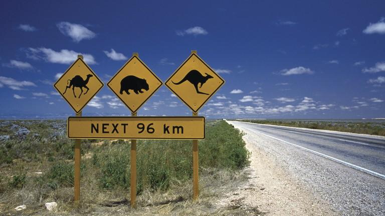 Map Of Australia Dangerous Animals.Meet Australia S Deadliest Animals