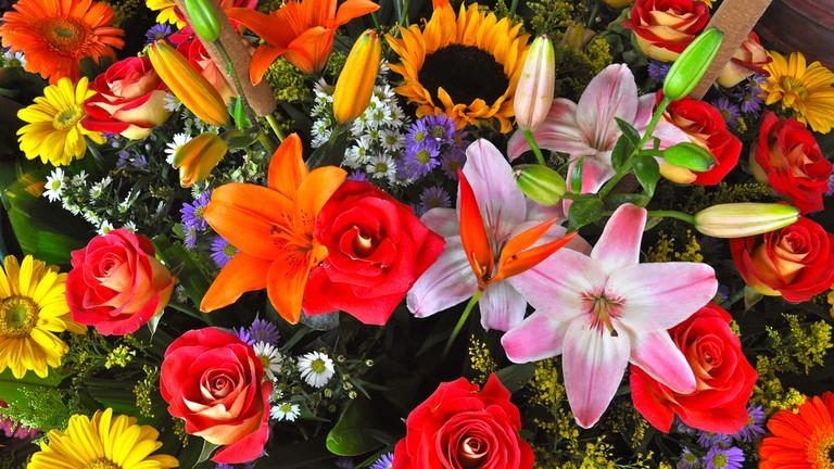 Flower Market in San Ángel | © katiebordner/Flickr
