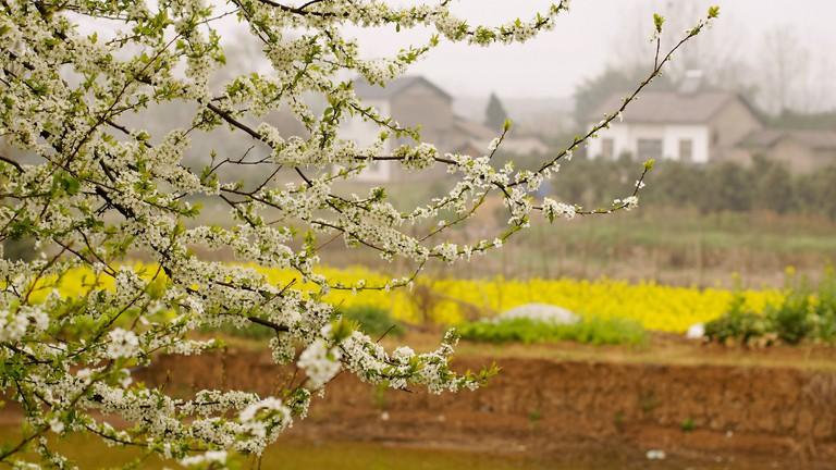 Spring in China Village|©Jun Kok/Flickr