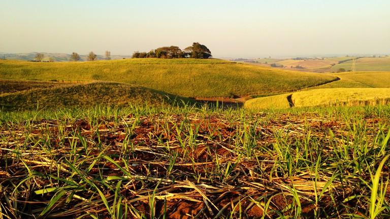 A Brief History of Durban's Sugar Cane