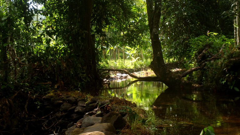 "<a href=""https://www.flickr.com/photos/sanmitrakale/21905035830/"" target=""_blank"">Netravali Wildlife Sanctuary   © solarisgirl / Flickr</a>"