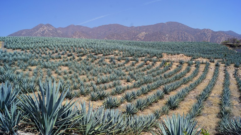 Taking The Tequila Trail In Jalisco Mexico