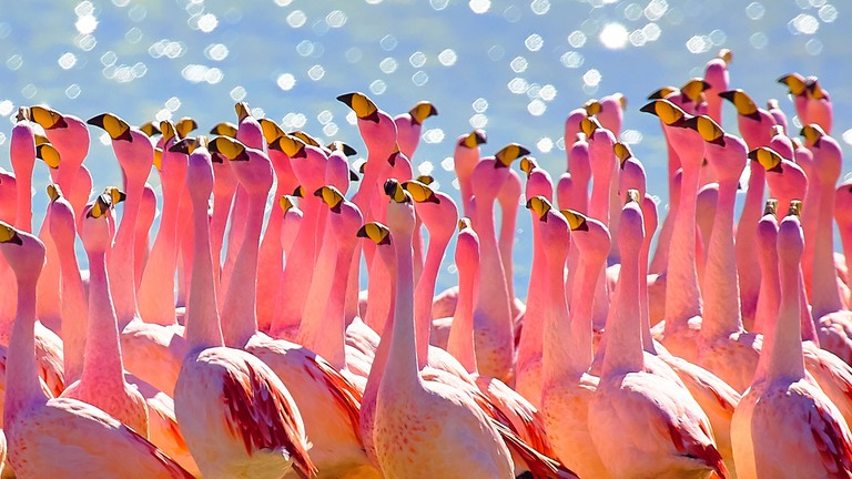 16 Awesome Native Animal Species You Ll Find In Bolivia