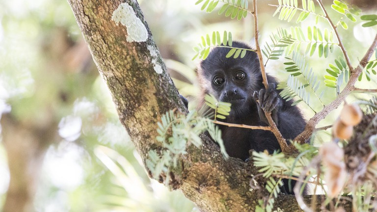 11 Awesome Native Animals You Must See in Costa Rica