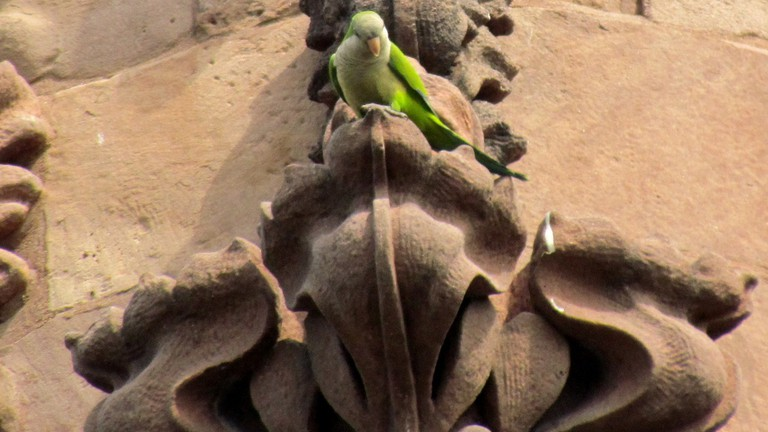 10 Things You Need to Know About the Wild Parrots of Brooklyn
