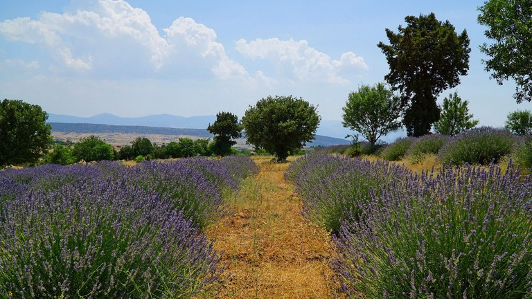 Kuyucak: Turkey's Fairytale Lavender Village
