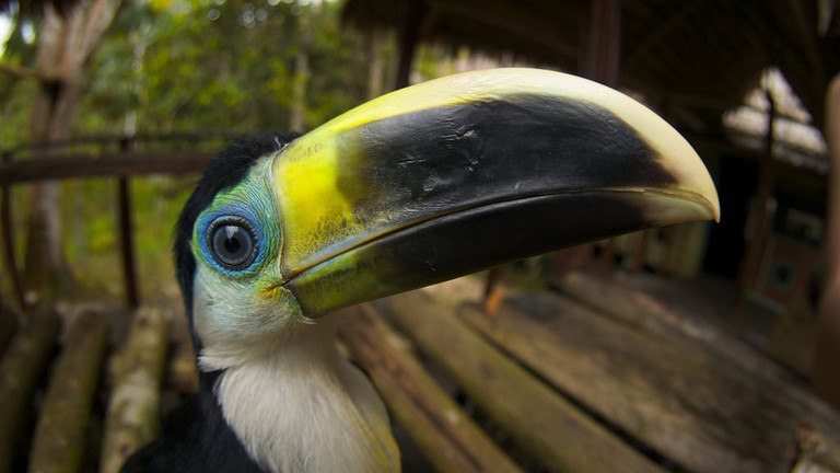 Tucan | © Torrenegra / Flickr