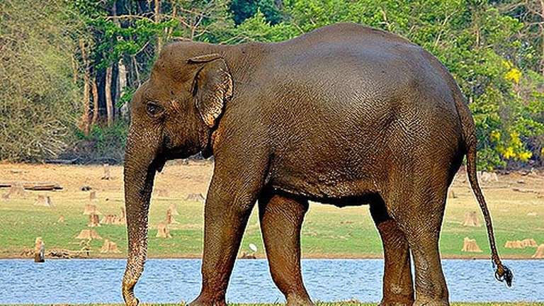 11 Awesome Native Animals You Must See in Laos