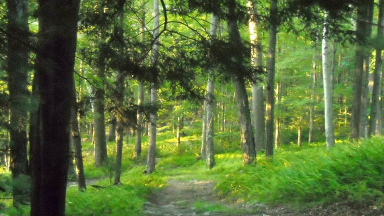 Hiking the woodland trail at sunset   © anslatadams/Flickr