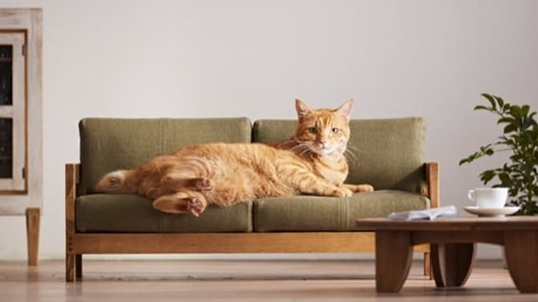 You Can Now Buy Luxury Japanese Furniture For Cats And It S Amazing
